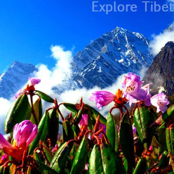 Travel Price Increased - Tibet Travel News