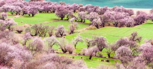 Nyingchi Peach Blossom Festival