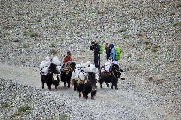 Pricing announcement of animal's transportation services by Tibet Mount Kailash Pilgrim Service Company