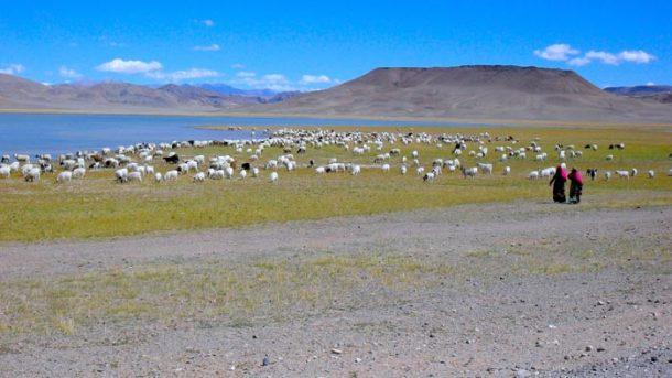 Tibet Travel News: Reopening of Tibet Tourist attractions in Tibet