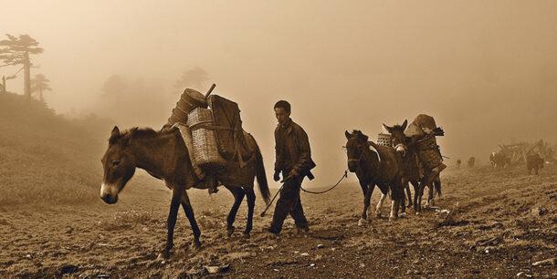 Tibet Tea Horse Road