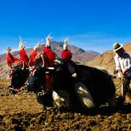 13 Days Chengdu to Lhasa Overland