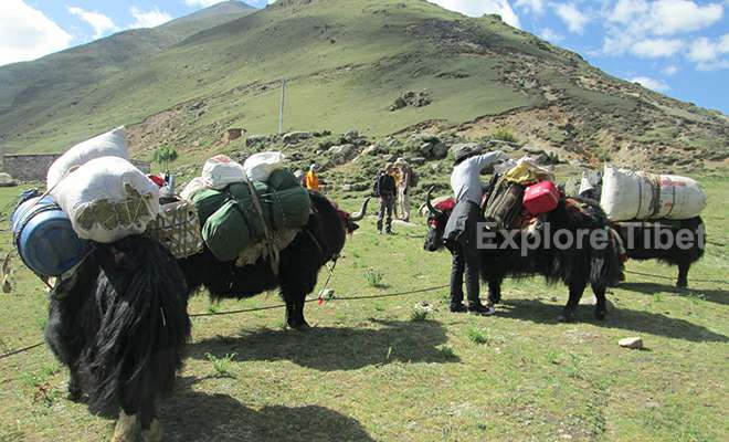 Tibet trekking yaks and yak men
