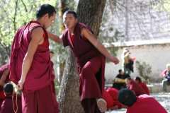 11-Sera-monks-debating